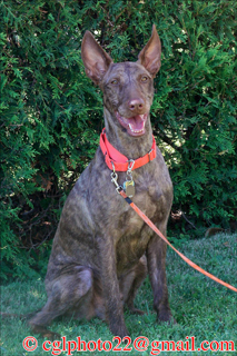 Xoloitzcuintli Club Of America Inc